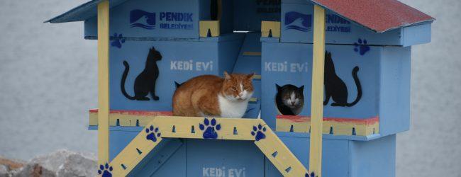 Pendik Belediyesi'nden Kedilere Villalar