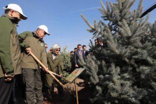 Cumhurbaşkanı Talimat Verdi 11 Milyon Fidan Dikildi