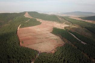 Pendik'te 20 Bin Fidan Toprakla Buluştu